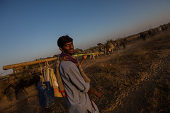 muslim jat shepherd in the great rann of kutch (anthony pappone photography) Tags: travel sunset india cow buffalo asia desert cattle cows sundown muslim traditional tribal tribes nomad asie mustache cloth tribe ethnic indi pastor herd indien indi gujarat inde rabari pastore ethnology azi nomade nomadic indland kutch  northindia jat etnic greatrannofkutch indija  etnia nomadi ethnie rabaritribe buhj dhanetajat   rabarishepherd jattribe anthropologye