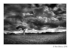 Chasing Clouds (Steve _ C) Tags: uk bw tree wales clouds canon mono moody fields lonetree 2014 5dmk11 stevechatman