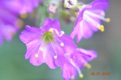DSC_0256 (kazadmanesh) Tags: و بهار خشکسالی