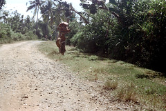 25-808 (ndpa / s. lundeen, archivist) Tags: road people bali woman color film rural 35mm walking indonesia cow nick 25 southpacific balance dirtroad local roadside 1970s load 1972 balancing indonesian carry carrying balinese dewolf oceania pacificislands nickdewolf photographbynickdewolf onherhead reel25