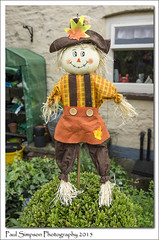 Hillbilly Scarecrow (Paul Simpson Photography) Tags: summer plants image scarecrow straw images lincolnshire hedge hillbilly opengardens photosof imageof hibaldstow photoof imagesof sonya77 paulsimpsonphotography june2015