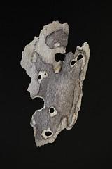 IMG_4975 (j.towbin ) Tags: macro texture nature faces holes bark minimalsim allrightsreserved