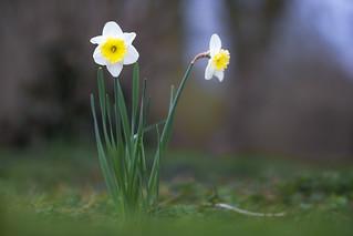 Celebrating spring...