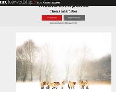 Please Vote! (Dynaries) Tags: vote stem contest wedstrijd nrc newspaper krant animals dieren horse paarden