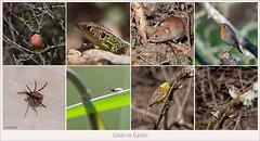 D700-706192 (Weinstöckle) Tags: dompfaff gimpel zauneidechse rötelmaus rotkehlchen zecke wespe schlupfwespe goldammer feldsperling vogel insekt makro