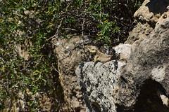 DSC_0263 (mark.greefhorst) Tags: cyprus northerncyprus salamis ancientworld roman