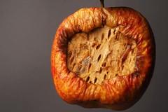 Forbidden Fruit (teresaannatkins) Tags: olympusuk mould foodphotography foodart rottenfood foodwaste fooddecay decay apple