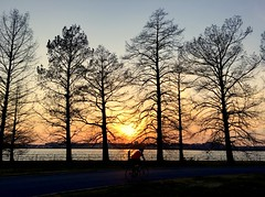 Hains Point Sunset w/Trees (Mr.TinDC) Tags: dc washingtondc hainspoint trees biking bike dcist sunset potomacriver silhouette