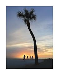Sun Down Siesta (icypics) Tags: america beach colour florida siestakeys iphoneography palms pastel silhouette sunset tree