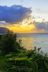 Return (Chad Dutson) Tags: beach chaddutson clouds evening fauna hawaii island kauai landscape nature ocean oceanscape paradise return sea seascape shore sunset twilight vegetation water waterscape wild wilderness