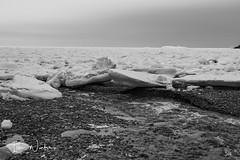 Middle Cove Ice-17-4 (Ian L Winter) Tags: nature newfoundland driftice ice middlecove logybaymiddlecoveoutercove newfoundlandandlabrador canada ca
