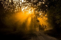 Early morning jeep safari in Bandhavgarh National Park, India (Mandala Travel) Tags: morning light india safari gypsy bandhavgarh jeepsafari matkat intia mahdyapradesh mandalatravel luontomatka