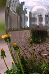 Hietalahti distortions (BigWhitePelican) Tags: flowers summer finland helsinki may hietalahti distortions olono22 2013 canoneos7d adobelightroom4 me2youphotographylevel1