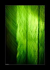 Bad Turned Right (LiesBaas) Tags: green photo interesting pix groen picture pic interessant kleurenfotografie liesbaas badturnedrightbyliesbaas
