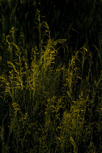 144/365: Grass at Night