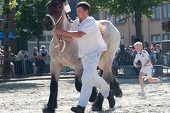 DSC_2302 (Ton van der Weerden) Tags: horses horse dutch de cheval belgian nederlands belges draft chevaux belgisch trait ijzendijke trekpaard trekpaarden