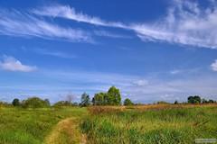2013. (krepsky69) Tags: summer nature summertime belarus    belarusiannature  polesje