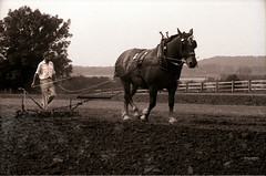 Horse Harrow (Neville Newman 1921~2010) Tags: leica horse rural farming rustic farmer harrow workhorse ploughman ilfordfp4plus harro
