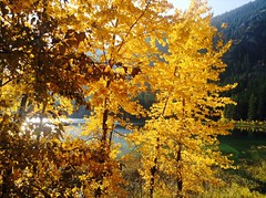 Autumn morning (thfr&I) Tags: autumn trees mountain lake canada sunshine yellow reflections golden bc pavilion thfri