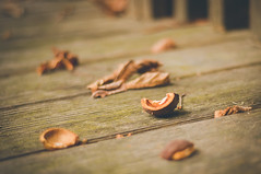 Autumn (marywilson's eye) Tags: wood old autumn orange naturaleza brown paris france hoja nature leaves vintage hojas 50mm leaf madera ancient nikon floor bokeh retro chestnut otoo viejo husk naranja francia antiguo castaa suelo marrn d90 cscara vsco