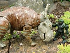 pachyrhinosaurus vs gorgosaurus  seek peace (DrSyn) Tags:...
