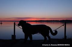 Watch Dog at Glen Foerd Mansion - Torresdale, PA (Bower Media) Tags: morning dog statue photographer glen pa mansion delawareriver glenfoerd torresdale foerd glenfoerdmansion larrydonoso bowermedia larryadonoso resunrise