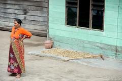Image ID# Whalen-131004-4496 | Aceh Coffee Tour Series (joshwhalen) Tags: travel orange coffee horizontal sumatra indonesia asia iac stockphotography takengon coffeeproduction coffeetravel interamericancoffee joshwhalenphotography whalenphotography joshwhalencom