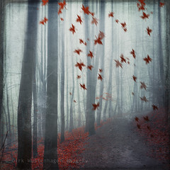 lines & leaves (Dyrk.Wyst) Tags: autumn trees light red rot fall texture nature wet leaves lines rain fog forest germany square landscape rouge deutschland licht haze rojo mood nebel path branches laub herbst natur noone peaceful atmosphere manipulation motionblur fantasy dreamy abstraction wuppertal ste landschaft wald bume bergischesland atmosphre regen stimmung mapleleaves weg herbstlaub dunst quadratisch composing nass textur creativephotography ahornbltter hunid vision:text=0681 vision:outdoor=086