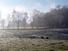 P1040931 (aishe's photography) Tags: blue winter sky cold fog fence germany deutschland weide frost nebel sheep himmel pasture blau zaun kalt schafe reif schaf mygearandme mygearandmepremium mygearandmebronze