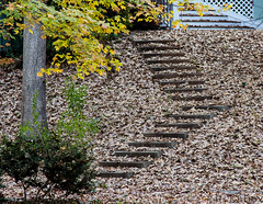 01DEC13: steps (tarboxje) Tags: fallleaves leaves steps slope goldenhillsgolfandcountryclub