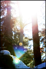 Bon jour ? (murddoc) Tags: wood light snow france tree forest grenoble lumiere neige foret arbre anap murddoc