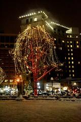 Rice Park (Liz Nemmers) Tags: park christmas winter holiday snow nature beautiful minnesota night lights nikon catholic glow cathedral stpaul noel twincities bloomington mn ricepark nikond3100 bloomingtontree