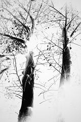 tree nights #1 (abonamous) Tags: tree monochrome night sony flash inverted a7 ilce7