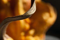 With a Twist (jessicalowell20) Tags: yellow stem twist gourd squash warty