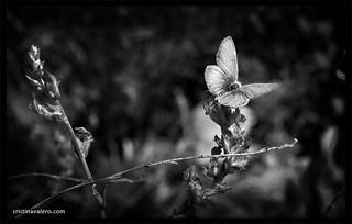 Luz en las alas