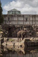 The Former zoo of East Berlin - Tierpark (Friedrichsfelde) (Norte_it [Dario J Lagan]) Tags: original berlin animals landscape zoo europe visit ddr tierpark biggest largest paitings wilhelm cages pieck