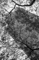 (David Davidoff) Tags: city trees urban bw streetphotography oldbuilding leicam3 blackwhitefilm kentmere
