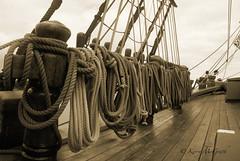 HMS Bounty Aug112012_3509c3rs (kmcgrath1234) Tags: sepia hurricane tallship hmsbounty belfastmaine capehatterasnorthcarolina superstormsandy mutinyonthebounty1962 yellowbeard1983 spongbobsquarepants2004 treasureisland1990 piratesofthecaribbeaniiiii20062007 disney'soceans2010