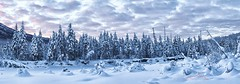 ER Treeline (Explore) (Ed Boudreau) Tags: winter sunset snow river landscape eagleriver winterscene alaskalandscape