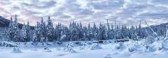 ER Treeline (Explore) (Ed Boudreau) Tags: winter sunset snow river landscape eagleriver winterscene alaskalandscape