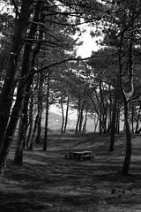 No title (Testigo Indirecto) Tags: wood blackandwhite blancoynegro bench quiet desert empty banco bosque desierto vacio pinar emptyspace