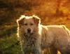 Welpenerziehunghundeerziehungde
