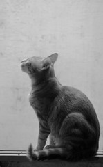 Marlon (laurw) Tags: blackandwhite cat gato
