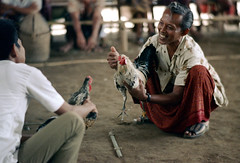 26-154 (ndpa / s. lundeen, archivist) Tags: people bali man color men bird film smile face smiling birds 35mm indonesia 26 nick cock arena southpacific handlers rooster cocks 1970s 1972 handler roosters indonesian crouching cockfight gamecock squatting gamecocks balinese dewolf oceania pacificislands cockfighting nickdewolf photographbynickdewolf cockfightingarena reel26 cockfightarena