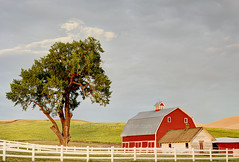 Countryside (Fee Chin) Tags: light red sky usa cloud white tree barn fence golden countryside hill peaceful calm palouse