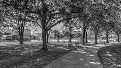 Dappled Light (mahler9) Tags: esplanade cambridge dappled light shadow jaym july 2015 hdr blackandwhite bw charlesriverreservation mahler9 bnw