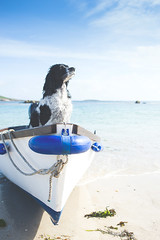 scilly-tresco-dog-sitting-on-boat-3-anthonygreenwood (The official guide to the Isles of Scilly UK) Tags: tresco islesofscilly