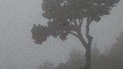 A14448 / fog in the park, extra texture (janeland) Tags: sanfrancisco california 94118 goldengatepark fog silhouette tree pe016 grey noncoloursincolour july 2016