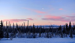 Sunday Morning in Alaska (Explored) (JLS Photography - Alaska) Tags: alaska alaskalandscape america landscape lastfrontier landscapes wilderness winter winterlandscape forest woods mountains mountainpeaks sunrise morning morninglight skyline sky jlsphotographyalaska pastel clouds moon trees snow