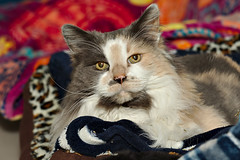 Abby - 11 year old spayed female
